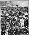 NSRW Picking Tea in Ceylon.jpg
