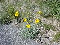 NTS - Wild Flowers 005.jpg