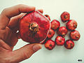 Nar pomegranate svln4821 in my hand.jpg