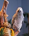 National Aviary (13020417464).jpg