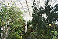 National Botanic Garden,Dublin,Ireland - panoramio (48).jpg