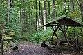 Nationalpark Hainich (8).jpg