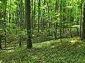 Nationalpark Hainich craulaer Kreuz 2020-06-03 24.jpg