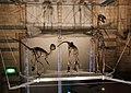 Natural History Museum (15517244272).jpg