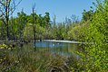 Naturschutzgebiet Emsdettener Venn 21.jpg