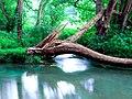 Naturschutzgebiet Neandertal NRW, Fluss Düssel, Fotograf J. & N. Suchorski 5.jpg