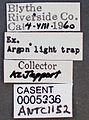 Neivamyrmex swainsonii casent0005336 label 1.jpg