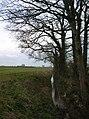 Nell Beck - geograph.org.uk - 388849.jpg