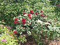 New York Botanical Garden 05.jpg