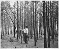 Newberry County, South Carolina. Erosion Control. (No detailed description given.) - NARA - 522719.jpg