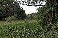 Niederrodener Lache 14.jpg
