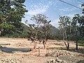 Nord Department, Haiti - panoramio (9).jpg