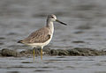 Nordmann's Greenshank - Jason Thompson.jpg