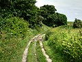 North Downs Way - geograph.org.uk - 1395016.jpg