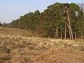 Northwestern edge of Island Thorns Inclosure, New Forest - geograph.org.uk - 386743.jpg