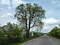 Nudyzhe Liubomlskyi Volynska-oak Volyniaka-view from street-1.jpg