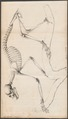 Nycticebus javanicus - skelet - 1834-1845 - Print - Iconographia Zoologica - Special Collections University of Amsterdam - UBA01 IZ19700122.tif
