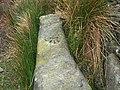 OS Benchmark at High Bark - geograph.org.uk - 446740.jpg