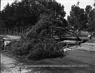 Streetcar strikes in the United States - Striking workers during the San Francisco streetcar strike in 1907 fell tree to obstruct the tracks.