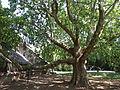 Odessa Main Botanical garden 044.jpg