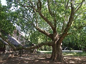 Odessa Botanical Garden - Image: Odessa Main Botanical garden 044