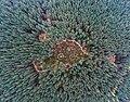 Odry z drona.jpg