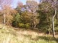 Olchon Barn Wood - geograph.org.uk - 1028842.jpg