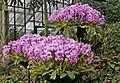Orchids, Kew Gardens, Surrey - geograph.org.uk - 1177805.jpg