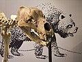 Orso delle caverne - Ursus spelaeus - 3.jpg