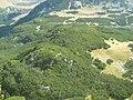 Pădurea de Jnepeni - panoramio.jpg