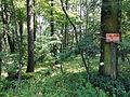POL Wiślica (śląskie) Rezerwat Przyrody Skarpa Wiślicka.JPG