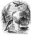 PSM V22 D764 The first water fowl.jpg