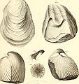 Palæontology (1869) (14784575215).jpg