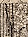 Paléontologie végétale cryptogames cellulaires et cryptogames vasculaires (1914) (14761226644).jpg