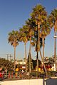 Palm trees and christmas tree near Seal Beach pier.jpg