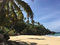 Palme Strand Dominikanische Republik.jpg