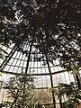 Palmengarten Gewächshaus ,Frankfurt.jpg