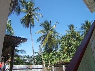 Clonbrook - Palm Trees in a Clonbrook backyard.