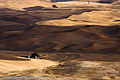 Palouse hills - 9762.jpg