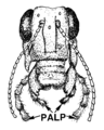 Palp (PSF).png