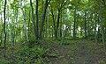 Panorama SOUS-BOIS yleduc.jpg