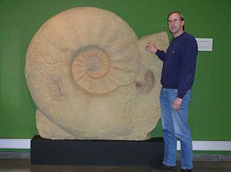 Ammonitida - Parapuzosia seppenradensis