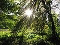 Parc Dendrologic - Arcalia (1424932872).jpg