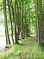 Parc et jardin du château de Bogard 04.jpg