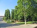 Parco delle Rimembranze (Sissa) - lato ovest 2019-06-23.jpg