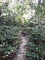 Parmadan Forest 17.jpg