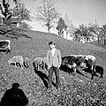 Pastirček, Gorenji Novaki 1954.jpg