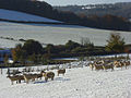 Pastures in snow, Fingest - geograph.org.uk - 1033993.jpg