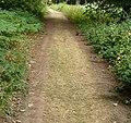 Path - panoramio (16).jpg