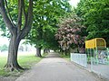 Path by the eastern edge of Faversham Recreation Ground, leading to Whitstable Road - geograph.org.uk - 812969.jpg